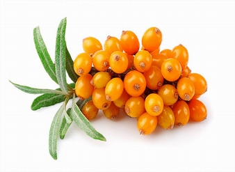 Seabuckthorn powder, Seabuckthorn Juice powder