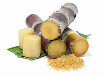 Sugarcane Extract, Sugar Cane Extract